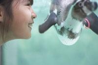 水槽のペンギンと女の子の横顔 02336004052| 写真素材・ストックフォト・画像・イラスト素材|アマナイメージズ