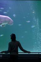 ジュゴンの水槽を見入る男の子