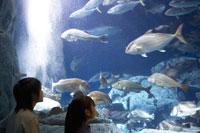 水槽の魚群を見る男の子と女の子