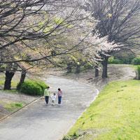手を繋いで公園を歩く親子3人