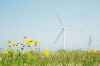 黄色い花と風力発電