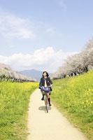 桜と菜の花畑を自転車で走る女子中学生