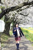 桜並木を歩く女子中学生