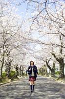 桜の並木道を歩く女子中学生