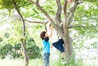 木に登る男の子