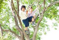 木に登る二人の男の子