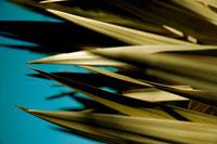 ユーカリの葉と青空