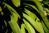 緑の葉に落ちる影