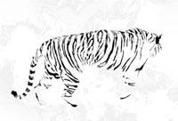 歩く白黒の虎