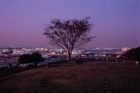富岡総合公園の夜景 02350000768| 写真素材・ストックフォト・画像・イラスト素材|アマナイメージズ