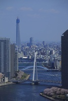 勝どきより隅田川と東京スカイツリーと桜を望む