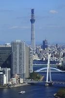 勝どきより隅田川と東京スカイツリーを望む 02350002718| 写真素材・ストックフォト・画像・イラスト素材|アマナイメージズ