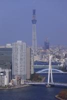 勝どきより隅田川と東京スカイツリーを望む 02350002719| 写真素材・ストックフォト・画像・イラスト素材|アマナイメージズ