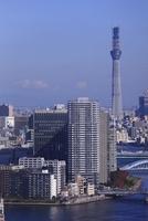 勝どきより東京スカイツリーを望む 02350002720| 写真素材・ストックフォト・画像・イラスト素材|アマナイメージズ