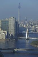 勝どきより隅田川と東京スカイツリーを望む 02350002750| 写真素材・ストックフォト・画像・イラスト素材|アマナイメージズ
