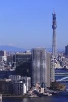 勝どきより東京スカイツリーを望む