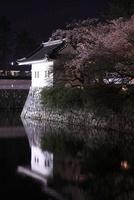 小田原城址公園の夜桜 02350002940| 写真素材・ストックフォト・画像・イラスト素材|アマナイメージズ