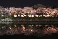 小田原城址公園の夜桜 02350002941| 写真素材・ストックフォト・画像・イラスト素材|アマナイメージズ