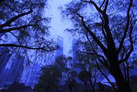 上海陸家中心緑地から望む浦東の高層ビルの夕景