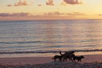 夕暮れのシャトーブリアン湾と犬