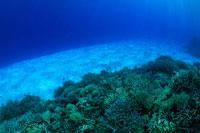 豊かなサンゴ礁と白い砂地