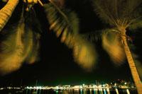 海岸線の夜景とヤシの木 02351001122| 写真素材・ストックフォト・画像・イラスト素材|アマナイメージズ
