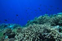 豊かなサンゴ礁