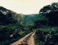 森林の中の道 02355000009| 写真素材・ストックフォト・画像・イラスト素材|アマナイメージズ