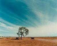 大地と一本の木 02355000026| 写真素材・ストックフォト・画像・イラスト素材|アマナイメージズ