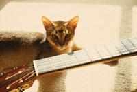 ギターとアビシニアン