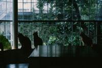 窓辺の猫 02358000020| 写真素材・ストックフォト・画像・イラスト素材|アマナイメージズ