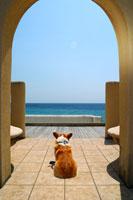 海を眺めるコーギー 02359000086| 写真素材・ストックフォト・画像・イラスト素材|アマナイメージズ