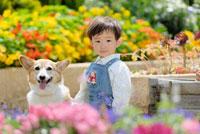 花壇の前に立つ男の子とコーギー犬 02359000136| 写真素材・ストックフォト・画像・イラスト素材|アマナイメージズ