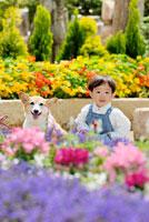 花壇の前に立つ男の子とコーギー犬 02359000136A| 写真素材・ストックフォト・画像・イラスト素材|アマナイメージズ