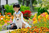 花壇に座る女の子とコーギー犬 02359000137| 写真素材・ストックフォト・画像・イラスト素材|アマナイメージズ