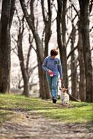 桜林の中を散歩する飼い主とコーギー 02359000190| 写真素材・ストックフォト・画像・イラスト素材|アマナイメージズ