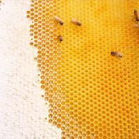 ミツバチの巣とミツバチ 02360000035| 写真素材・ストックフォト・画像・イラスト素材|アマナイメージズ