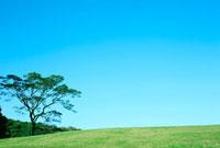 緑の丘と木