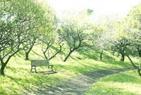 光のさす公園のベンチ 02360000311| 写真素材・ストックフォト・画像・イラスト素材|アマナイメージズ