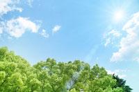 新緑と光 02362000206| 写真素材・ストックフォト・画像・イラスト素材|アマナイメージズ