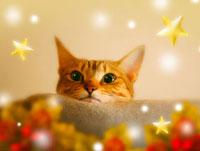 毛布の上にあごを乗せたネコと星