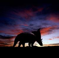 夕暮れの空とカスモサウルスのシルエット