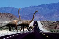 道路を横断するブラキオザウルスの親子