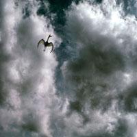 飛行するケツァルコアトルス
