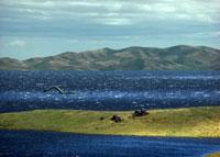 湖を泳ぐプレシオザウルス