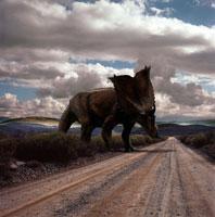 道を横切るパキリノサウルス 02364000041| 写真素材・ストックフォト・画像・イラスト素材|アマナイメージズ