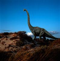 荒野に立つブラキオサウルス