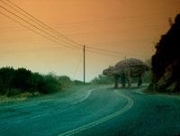 道路を歩くアンキロサウルス 02364000055| 写真素材・ストックフォト・画像・イラスト素材|アマナイメージズ