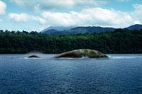 川を泳ぐプレシオザウルス