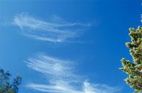木々の合間の青空に流れる雲 02372000344| 写真素材・ストックフォト・画像・イラスト素材|アマナイメージズ